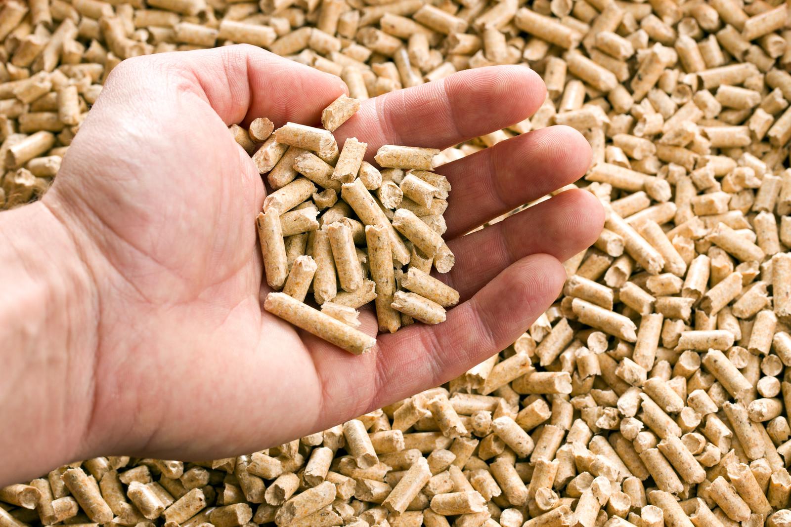 REBI SLU: Biomasa y la independencia externa del suministro